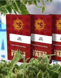 Интернет магазины семян канабиса продажи семян конопли